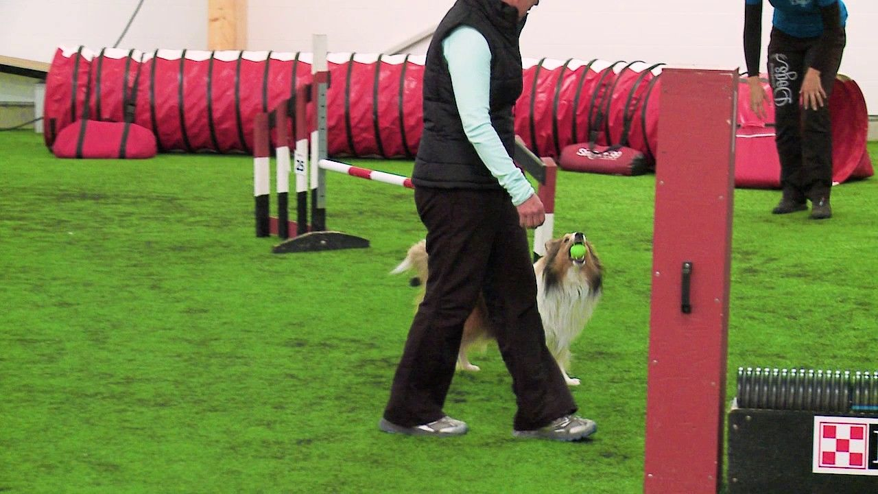 Training The Flick Video Preview Of Onemind Dogs Agility