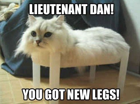 Funniest Animal Memes In The World : Funny animals memes imgflip
