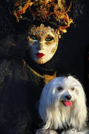 carnival masks -maltese