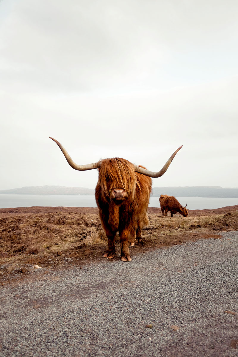 Road Tripping Across The Dramatic Scottish Landscape Road Trip Photography Scottish Landscape Scotland Road Trip