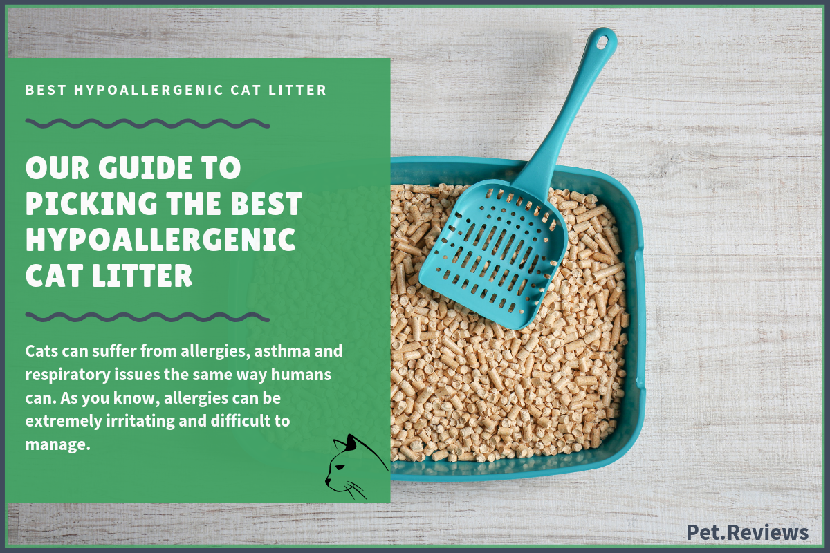 7 Best Natural Eco Friendly Cat Litters That Are Biodegradable In 2020 In 2020 Best Cat Litter Cat Litter Natural Cat Litter