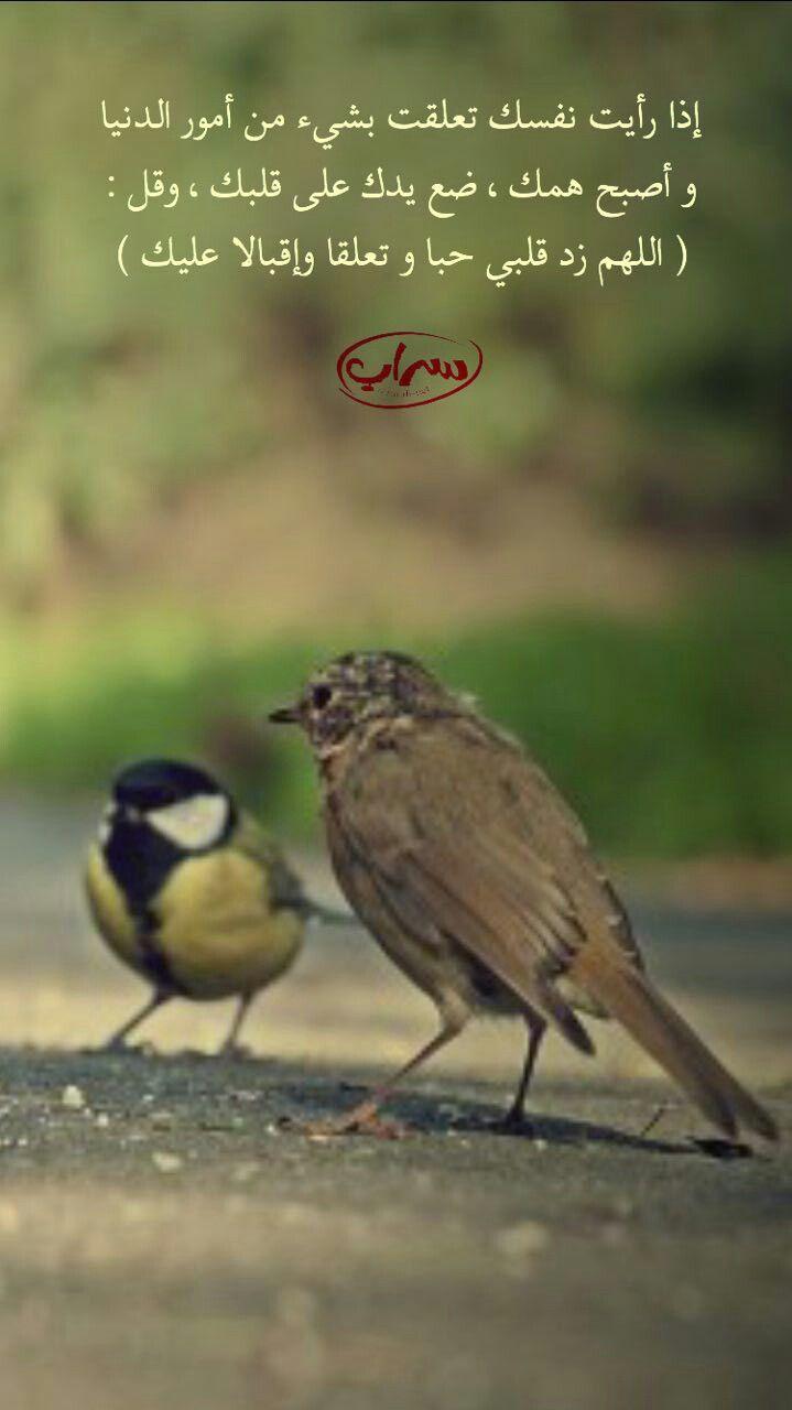Pin By الحمد لله تكفى On صور دعويه للنشر والتوزيع Animals Bird
