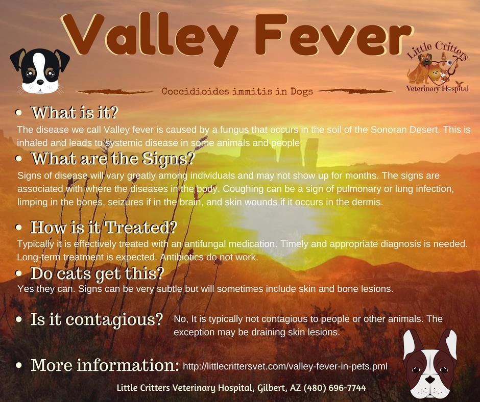 Valley Fever In Dogs Valley Fever Small Animal Clinic Pet Clinic