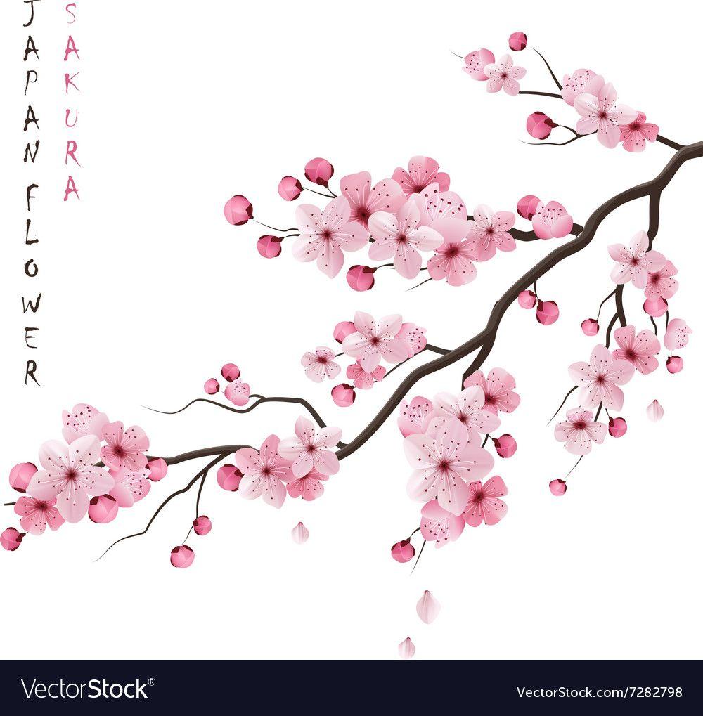 Realistic Sakura Branch Vector Image On Vectorstock Cherry Blossom Art Cherry Blossom Drawing Cherry Blossom Clip Art