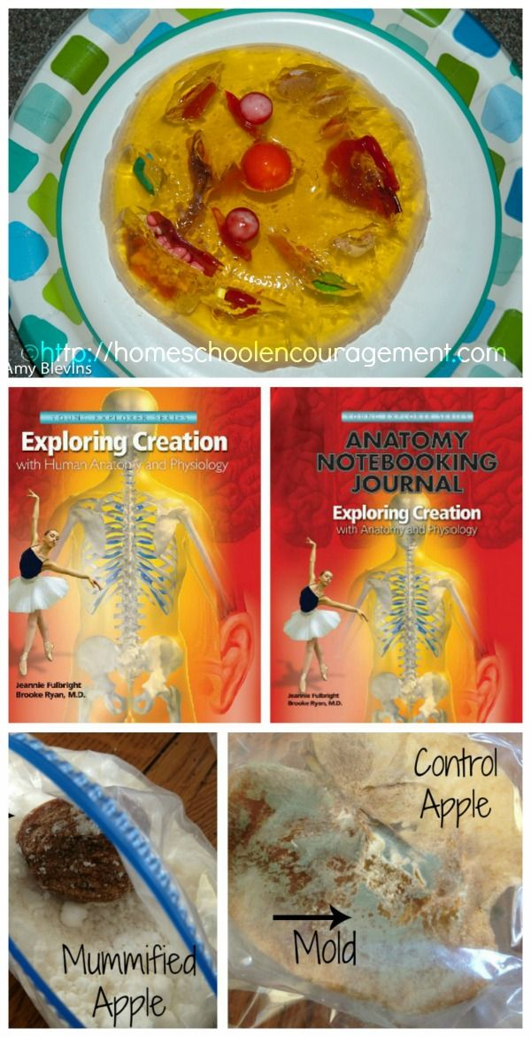 Curriculum Review: Apologia Exploring Creation With Human Anatomy ...