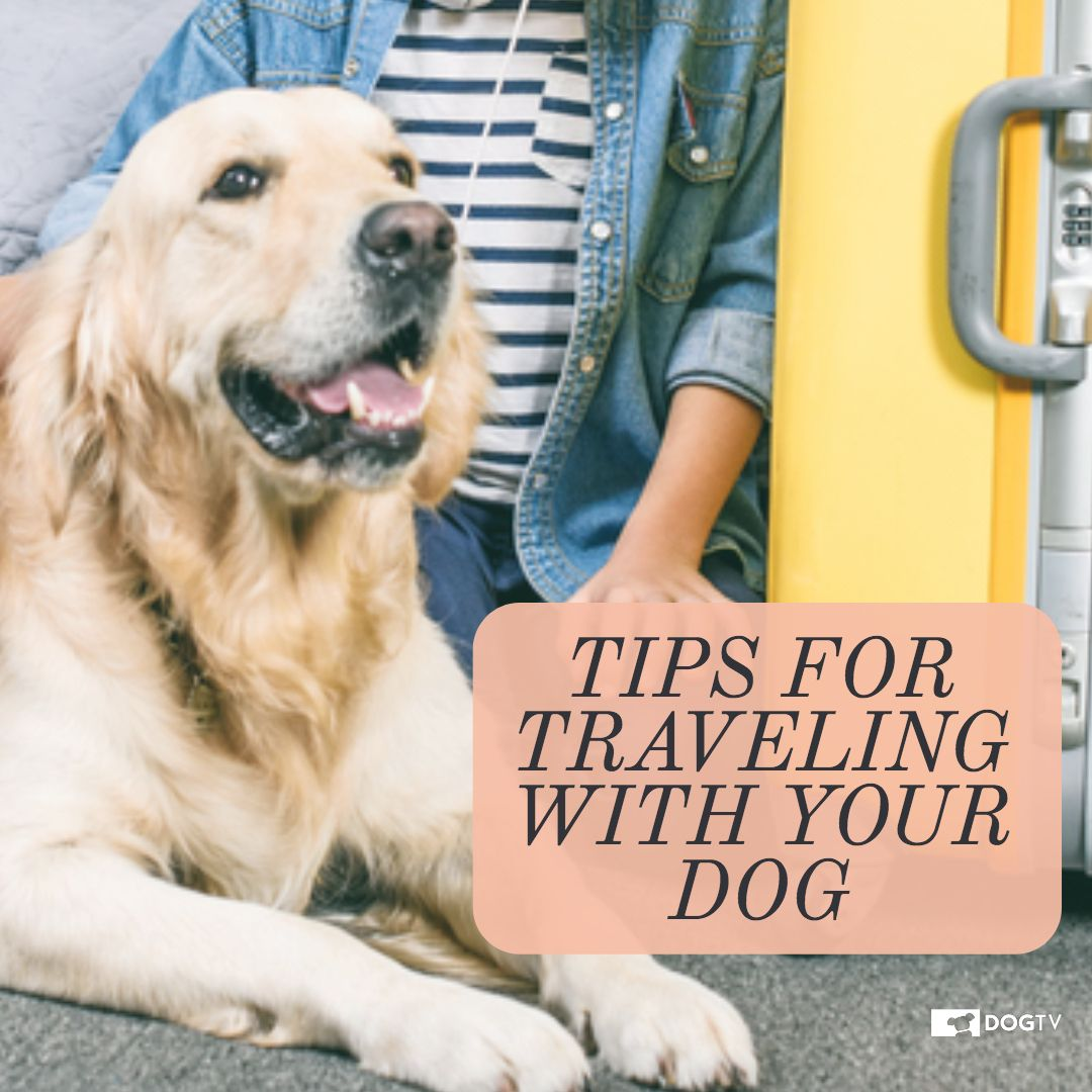 How to travel with your dog vacation rental etiquette