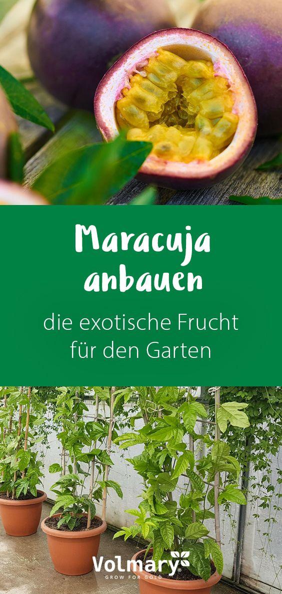 Maracuja anbauen - die exotische Frucht für den Garten