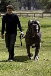 Images] AMAZING! 15 Of The Biggest Dogs In The World - Page 13 of ...