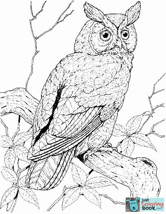 Perched Long Eared Owl Coloring Page Free Printable Coloring Pages