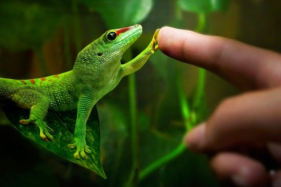 Flagras muito bonitos da vida selvagem | Ordinário - Blog de Humor - Conteúdo para WhatsApp, Facebook, Twitter, Instagram - Vídeos