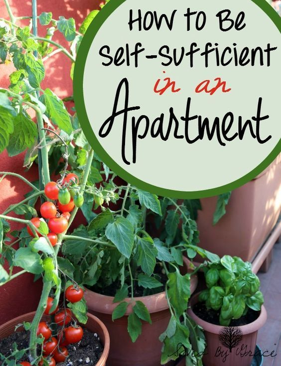 How to Be Self Sufficient in an Apartment- If your heart longs for rural areas, but you are stuck in the city, here are some simple ways to be more self sufficient in an apartment.: #apartmentgardening