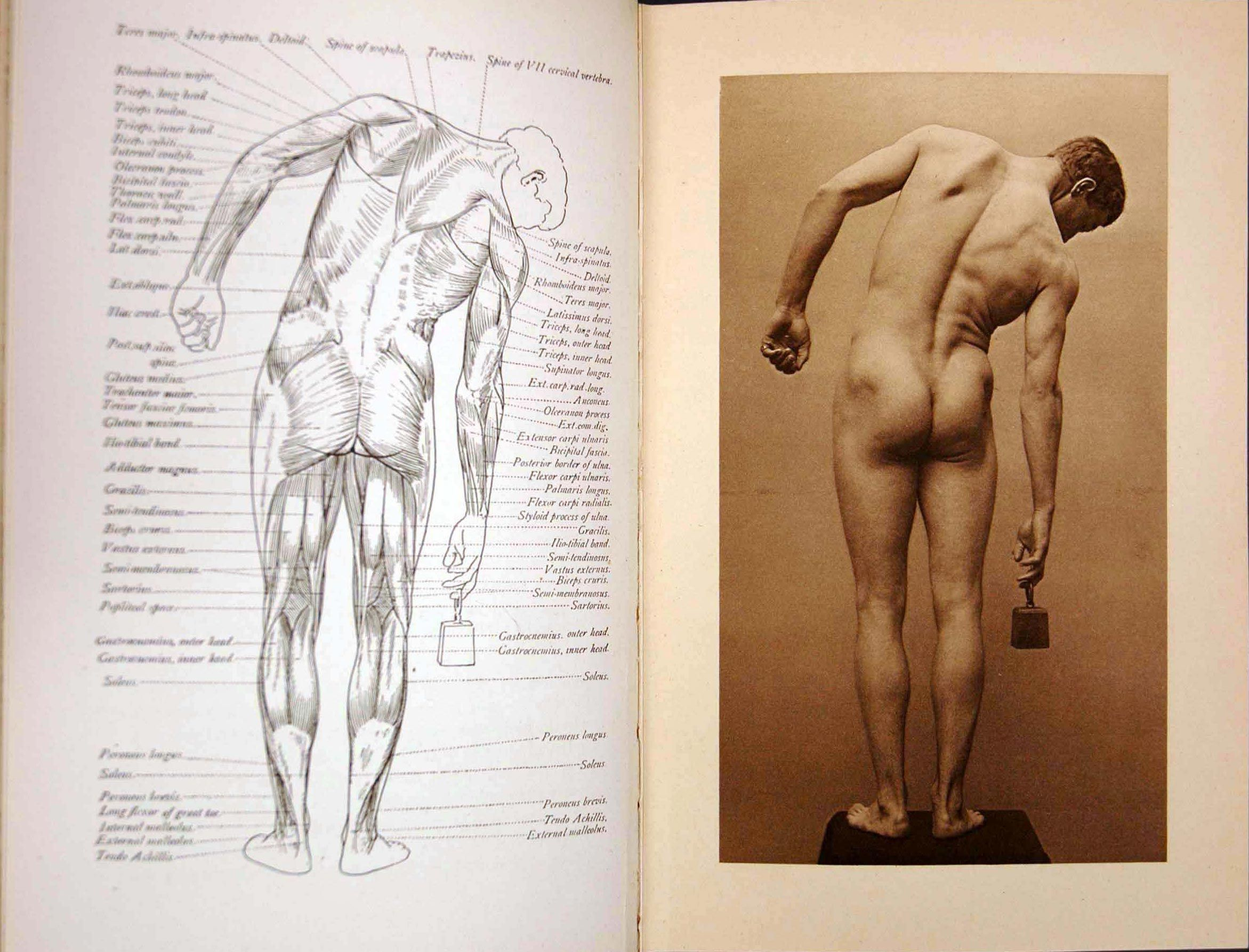 Human Body Sketches Arthur Thomson A Handbook Of Anatomy For Art