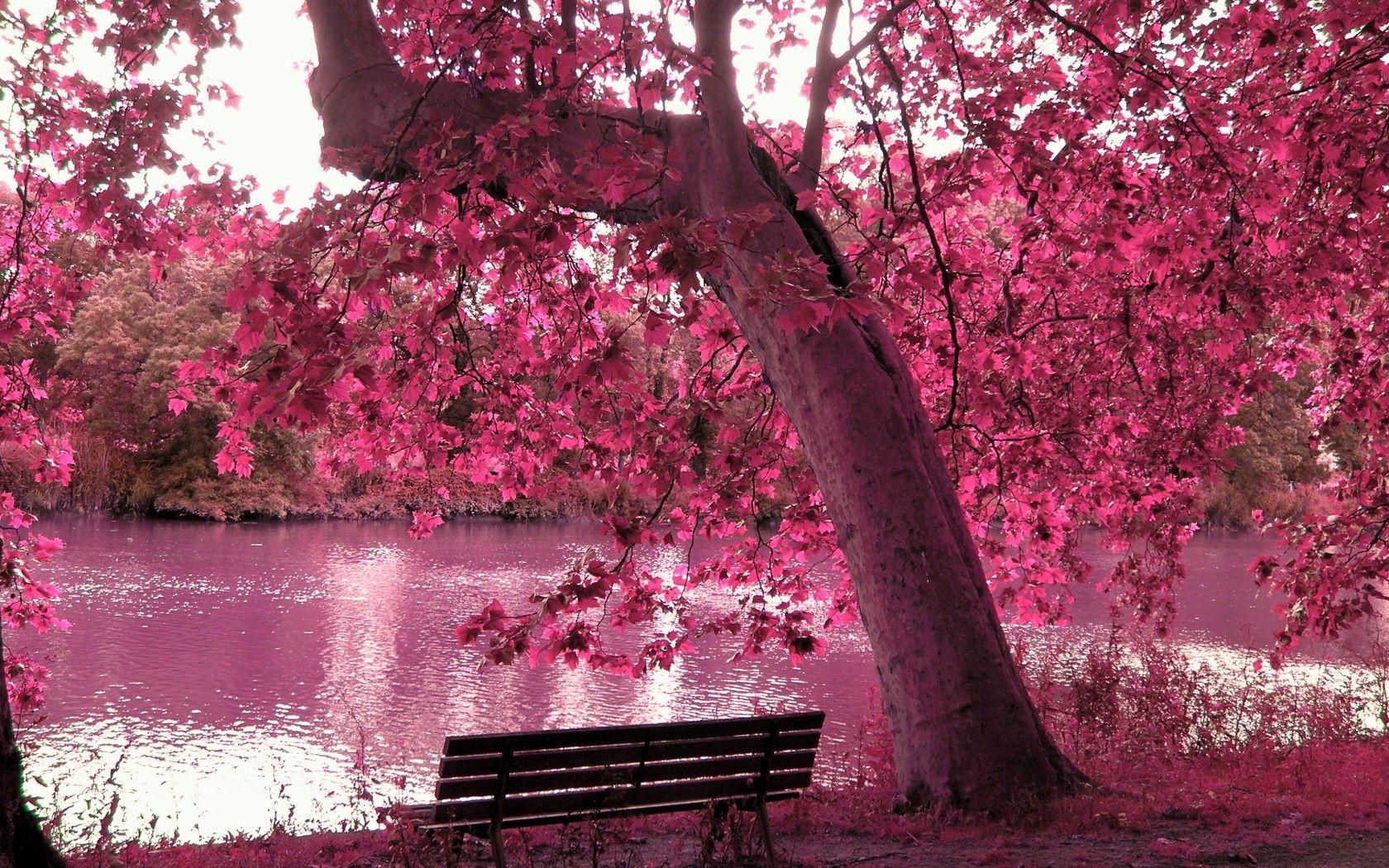 Spring Season Trees Pink Purple Spring Season Paradise Hd