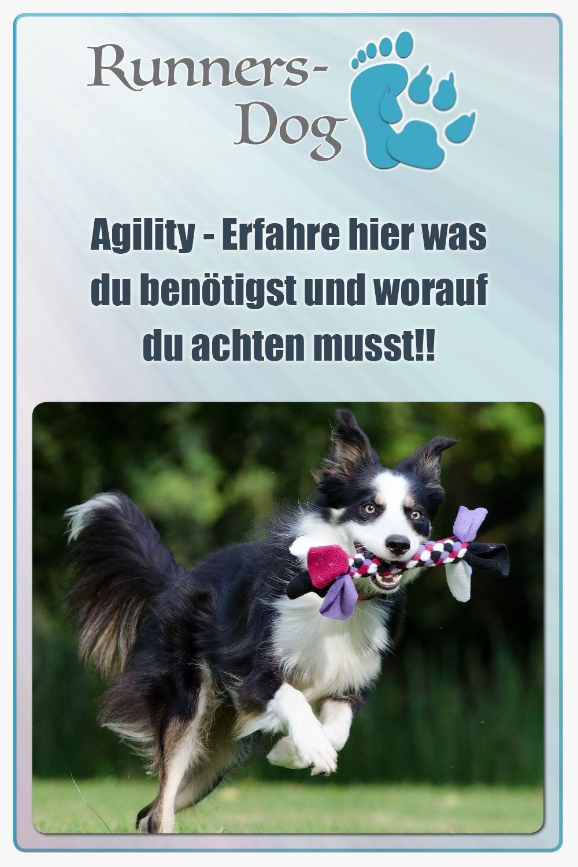 Agility Spielzeug Hund