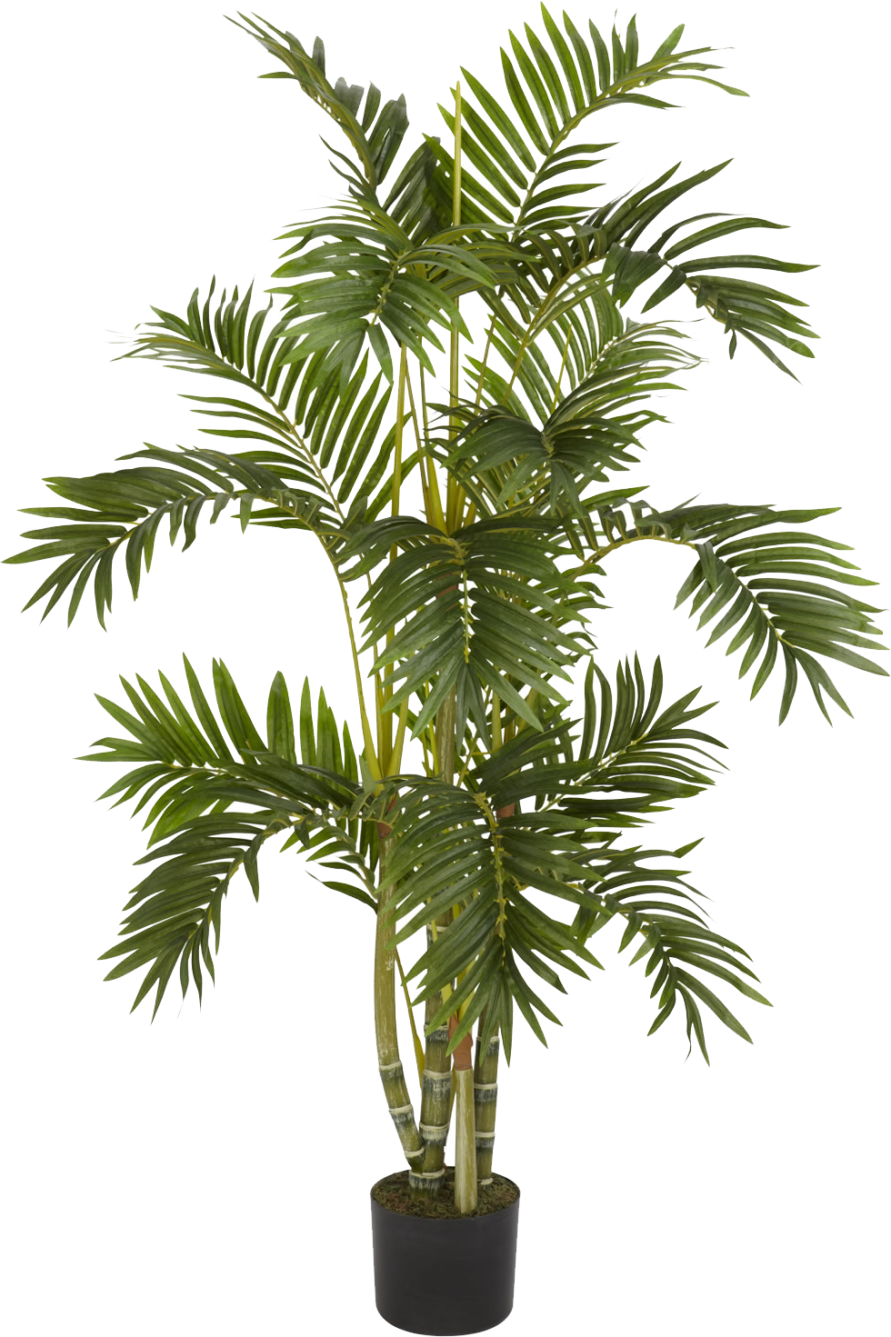 Image Result For Interior Tree Png Potted Trees Areca Palm Faux Plants
