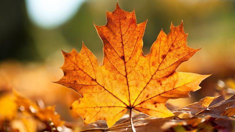 Desktop Autumn Fall Leaves Wallpapers Hd Autumn Leaves Wallpaper Fall Wallpaper Autumn Leaves