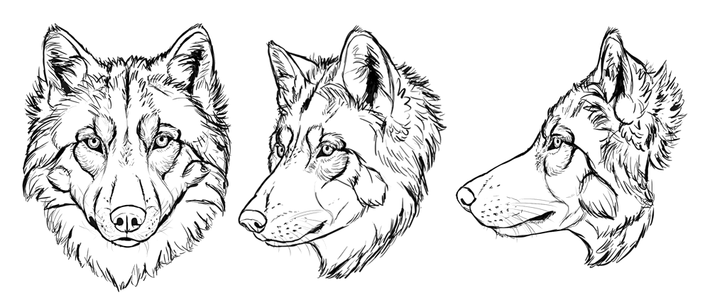 how to draw wolves head and shoulders knees and paws