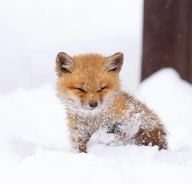 Cute Baby Animals That Will Make You Go 'Aww' - To