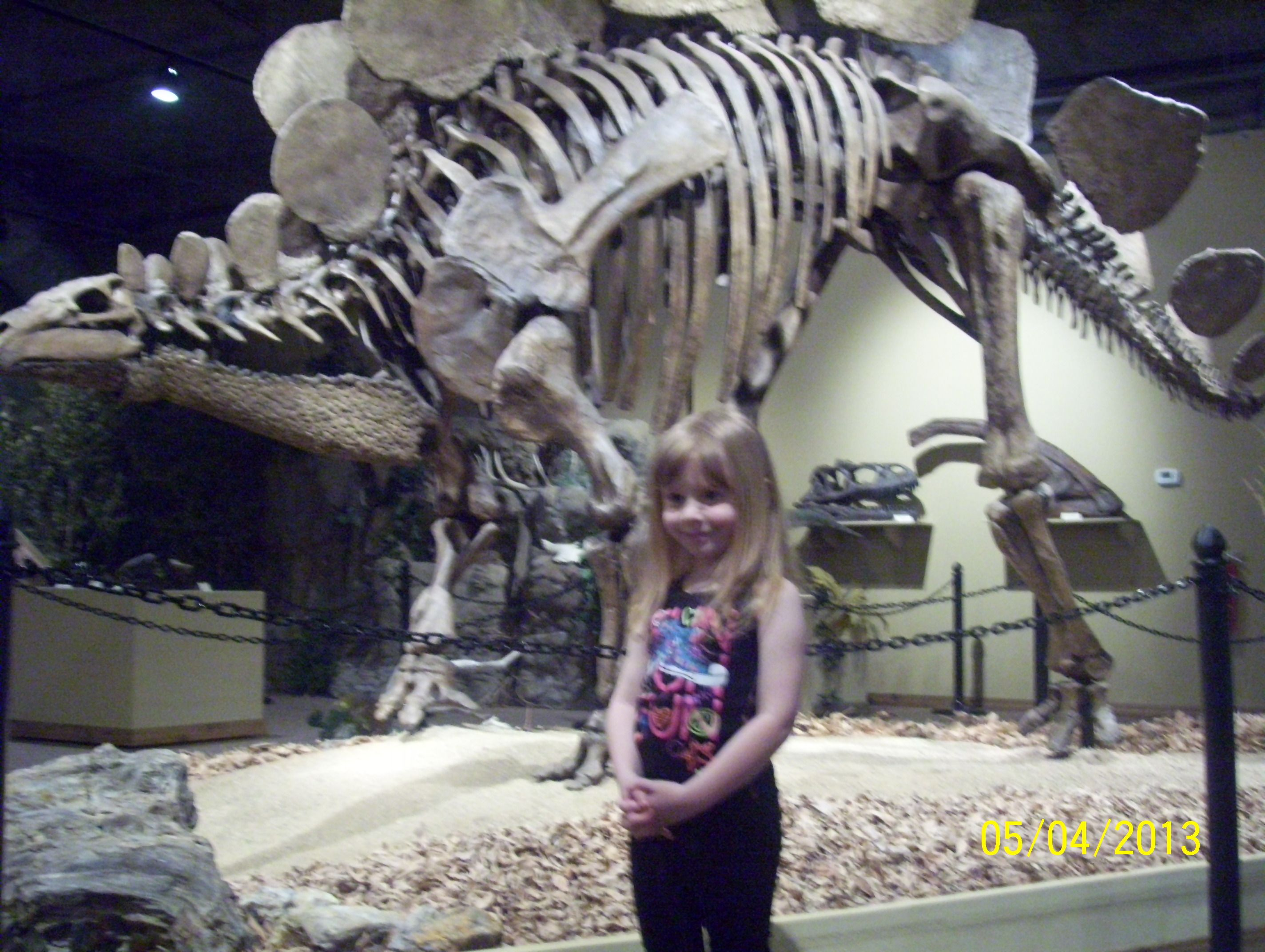Stegosaurus at the glendive dinosaur and fossil museum Dinosaur museum ohio