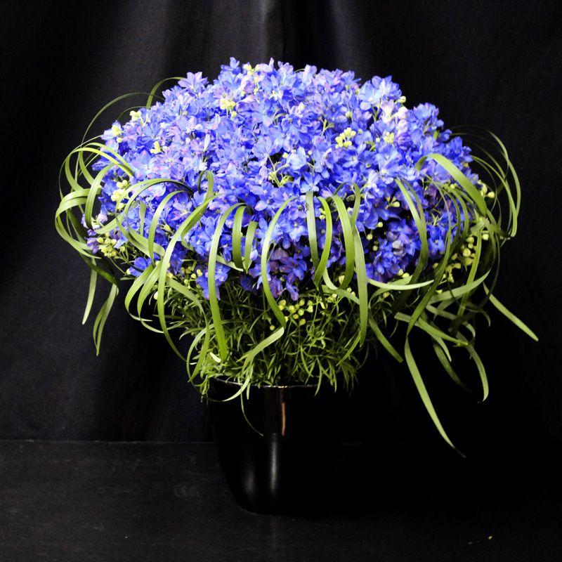 カシージャスブルー(デルフィニウムブルー) |花のプレゼント・フラワーギフト・贈り物なら、ケイフローリスト通販