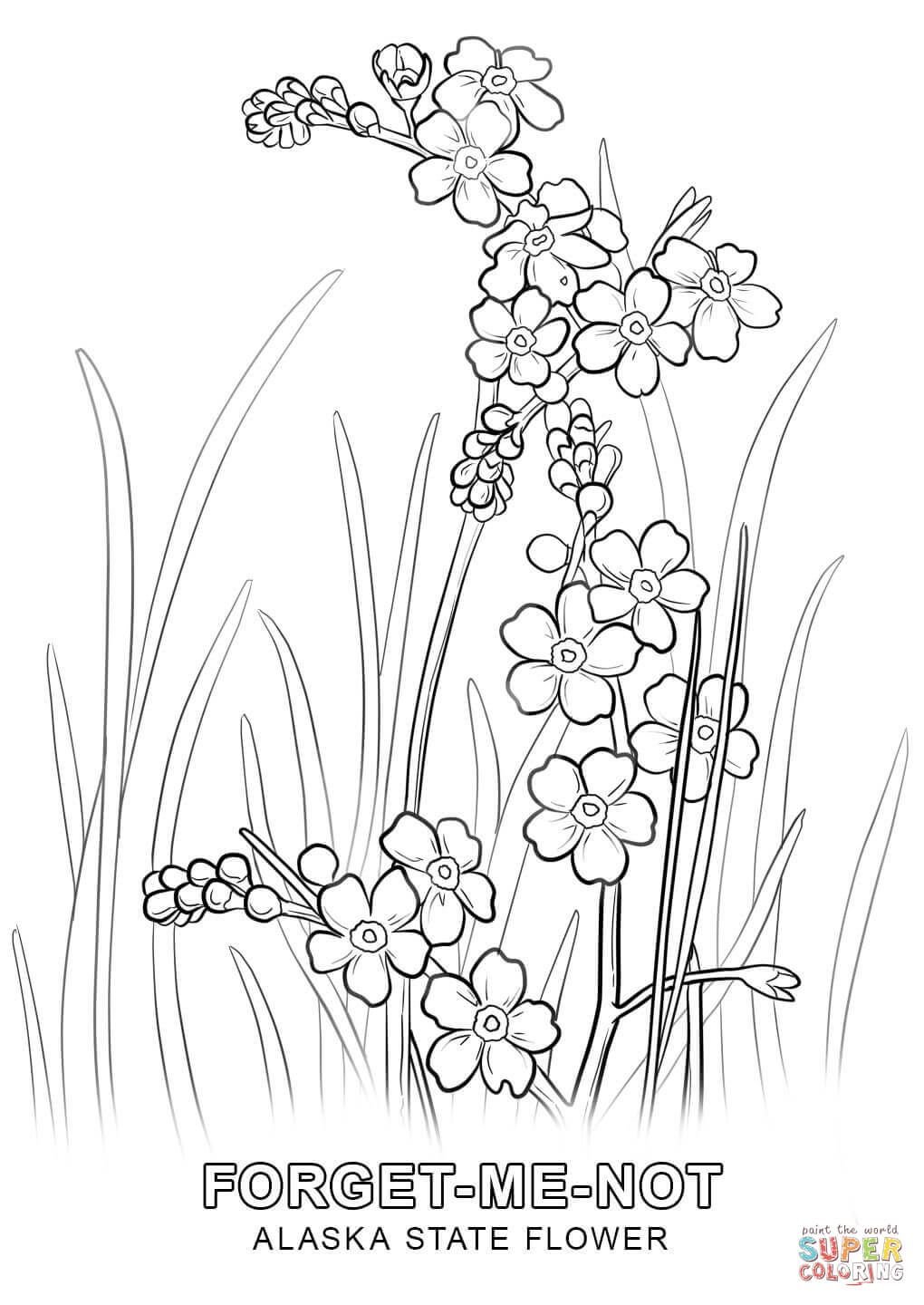 Alaska State Flower Coloring Page Free Printable