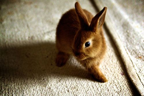 The cutest little bunny ever #rabbit