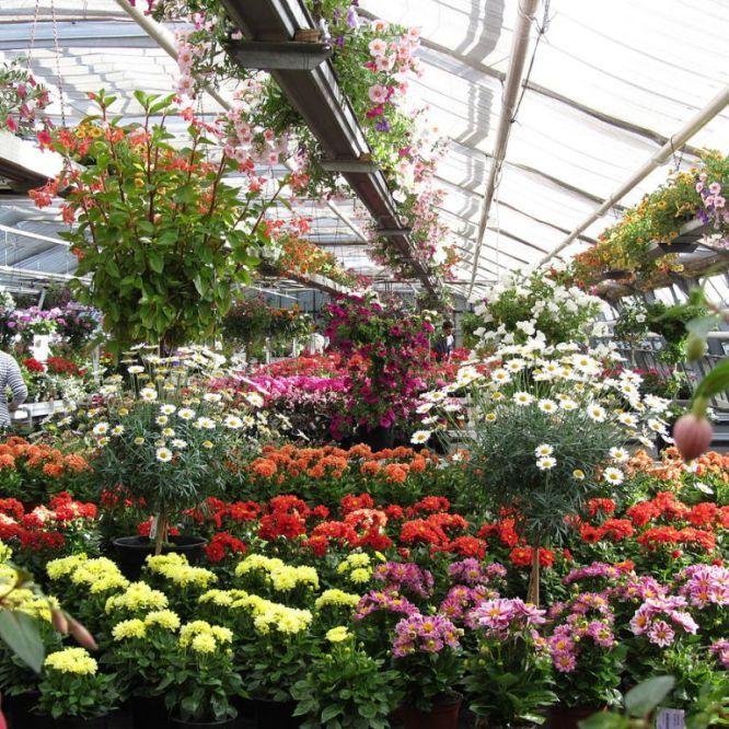 Où trouver des plantes originales : (légumes vivaces ...
