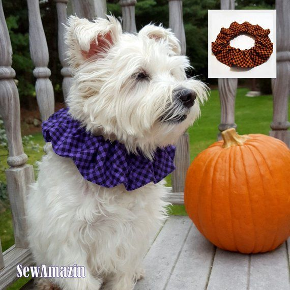 Swirly Pumpkins Over the Collar Dog Bandana Medium