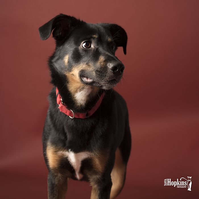 Capturing Pet Personalities For Adoption Portraits With Rustic Seamless Paper Pets Pet Photographer Adoption