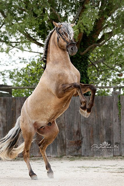 """Résultat de recherche d'images pour """"chevaux pinterest"""""""