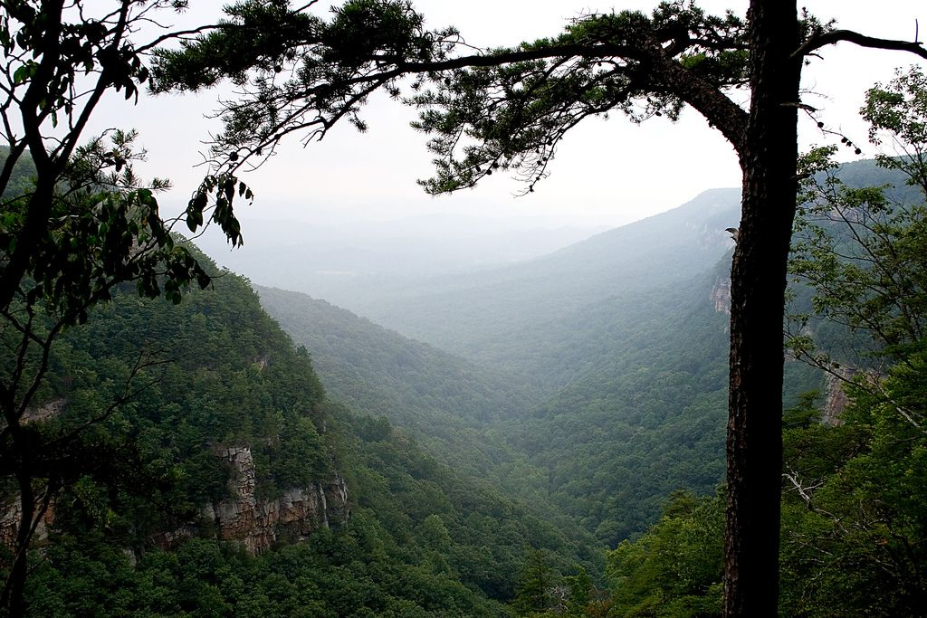 Winter Hikes: West Rim Loop in Cloudland Canyon, Georgia