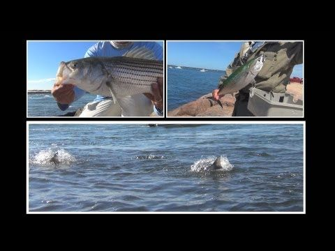 Awesome Day Fly Fishing for Albies, Stripers on the Rocks - Long Island, New York - (More info on: https://1-W-W.COM/fishing/awesome-day-fly-fishing-for-albies-stripers-on-the-rocks-long-island-new-york/)