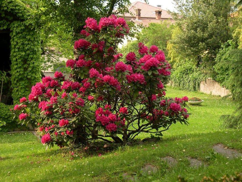 arbustos para disfrutar en invierno gardens
