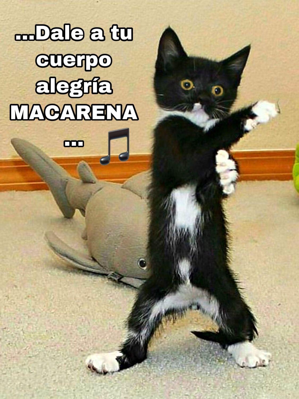 La Macarena Gato Bailando Funny Memes Memes Funny