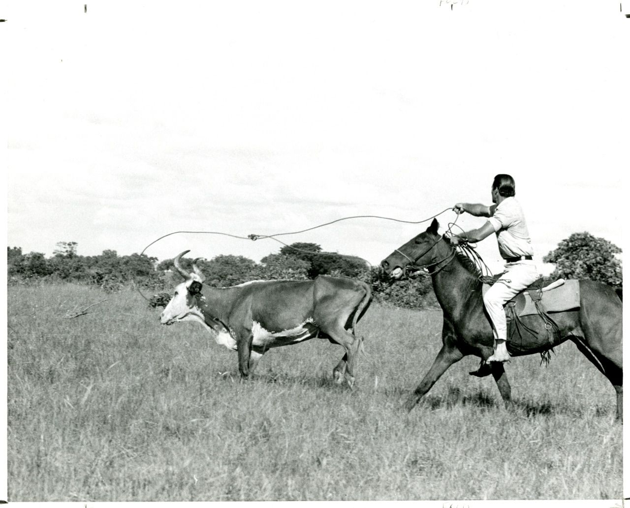 Stan Brock taking part in a cattle drive on the Rupununi