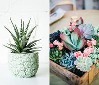 9 Plantes Non Toxiques Pour Les Animaux Decoration Plante