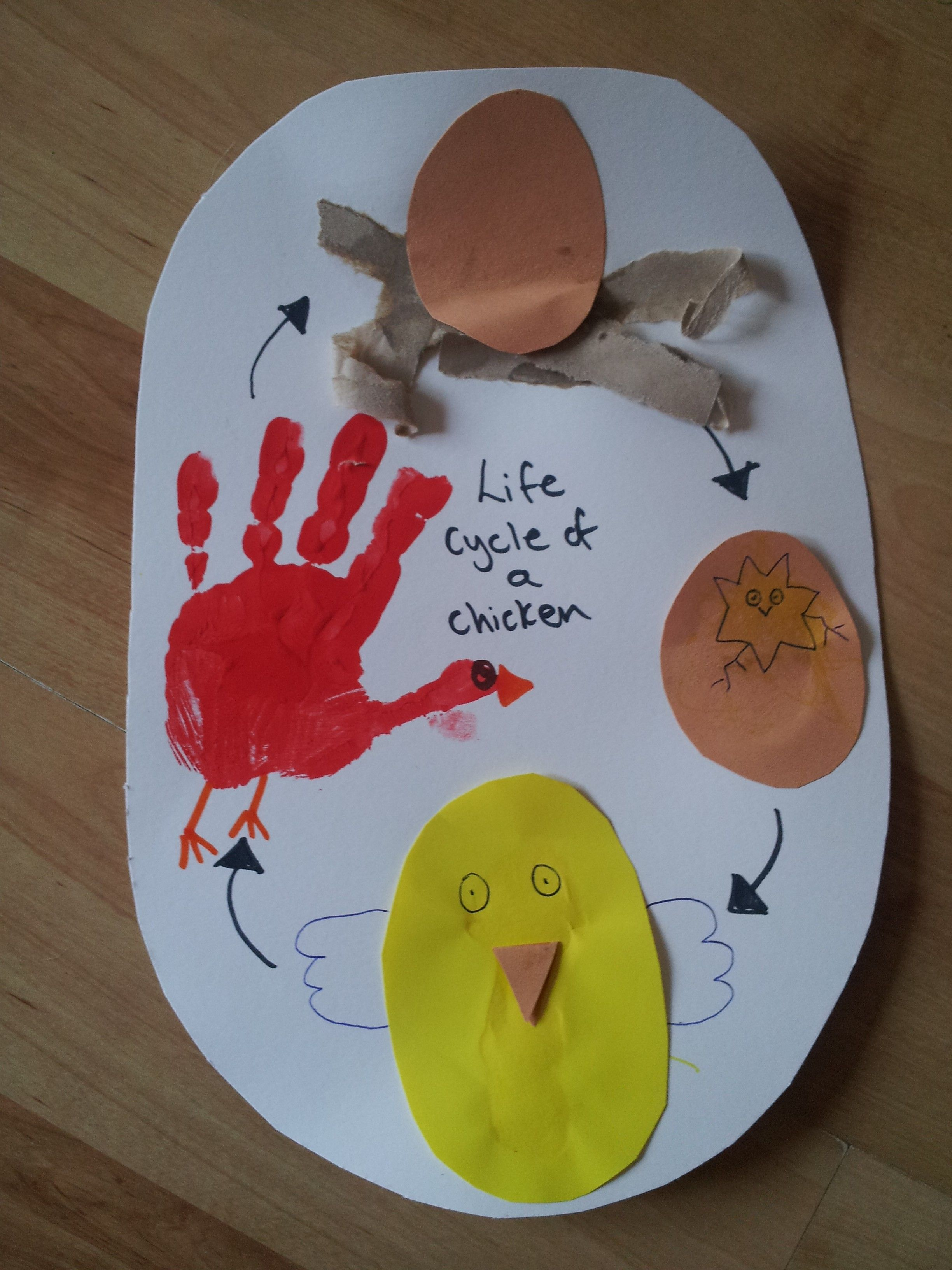 Fun Chicken Life Cycle Educational Craft