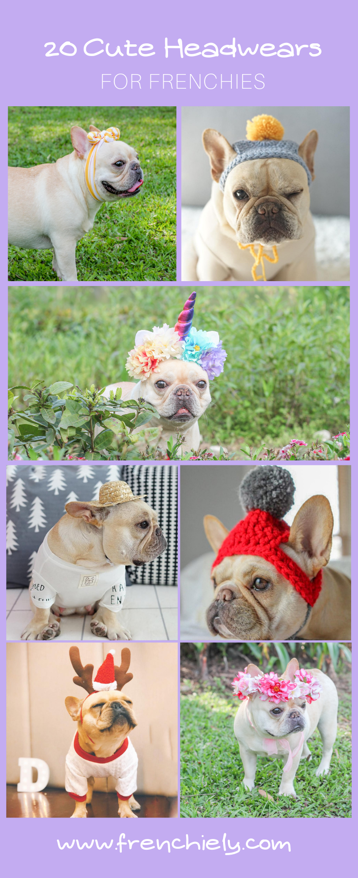 Struggling with what to dress up your French Bulldogs? Get