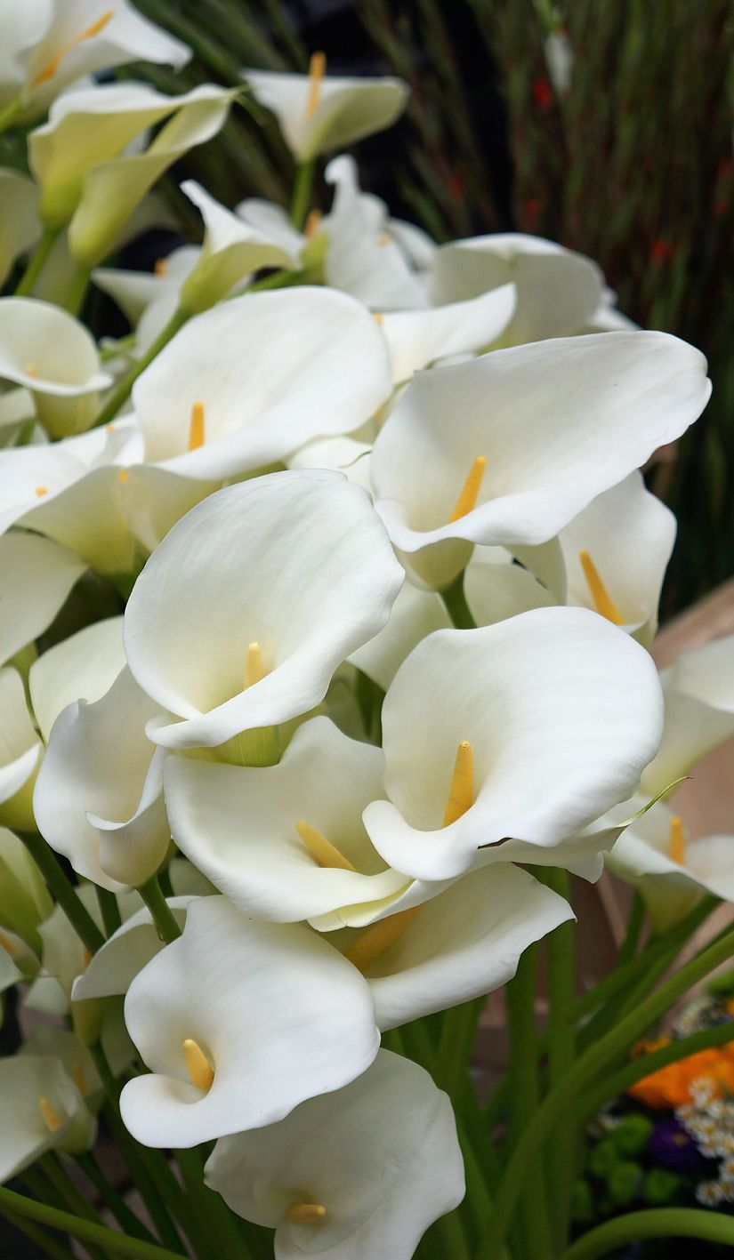 Calla Lilies On The Flower Market Flowers Calla Lily Pinterest