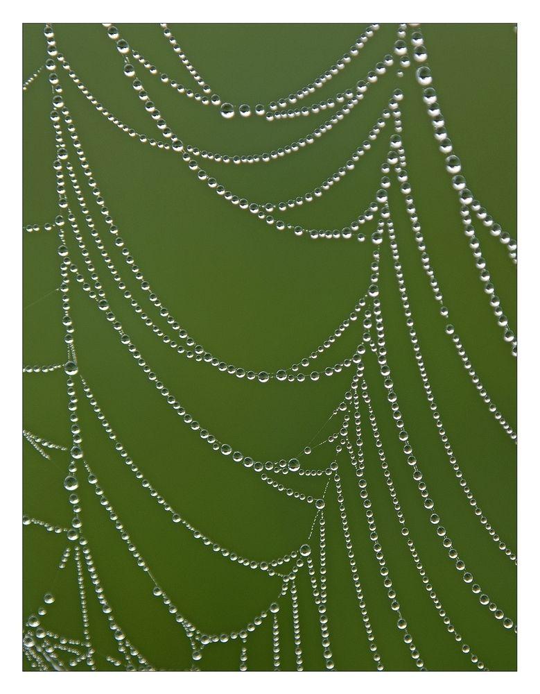 Spinnennetz Von Sheepy Drops Pinterest Spinnennetz