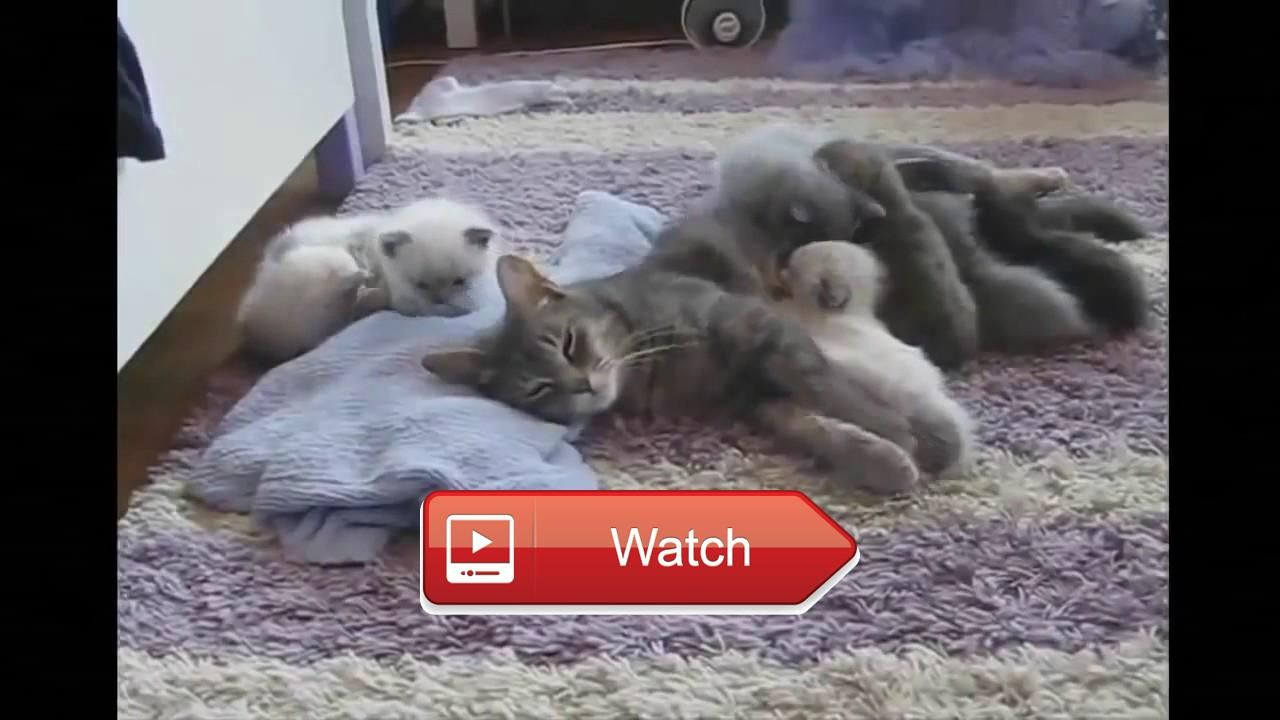 crazy cats videos funny cat clips Crazy Funny Cat And Dog Video