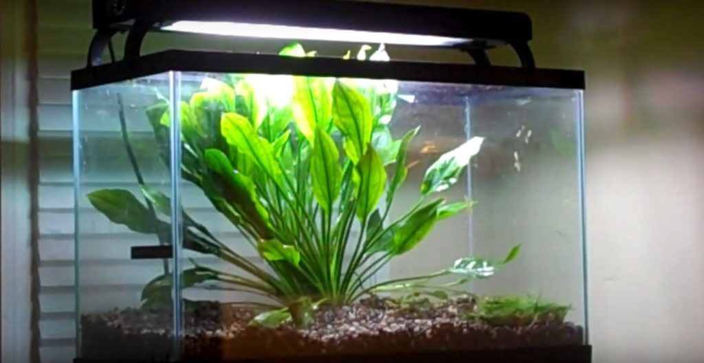 8 Best Aquarium Plants For Sand Substrate Easy To Care And