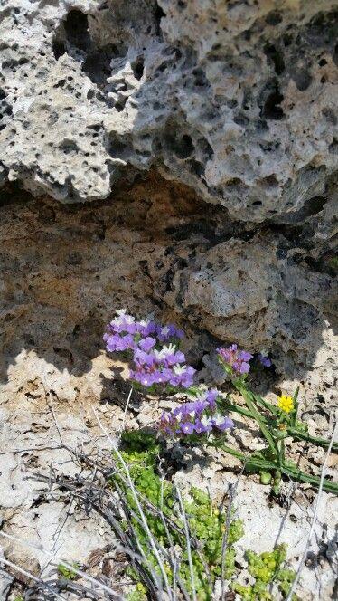 Kypros 4 april 2015