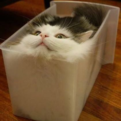 Katze Hund Tier Tier Tiere Tiere In 2020 Lustige Tierbabys