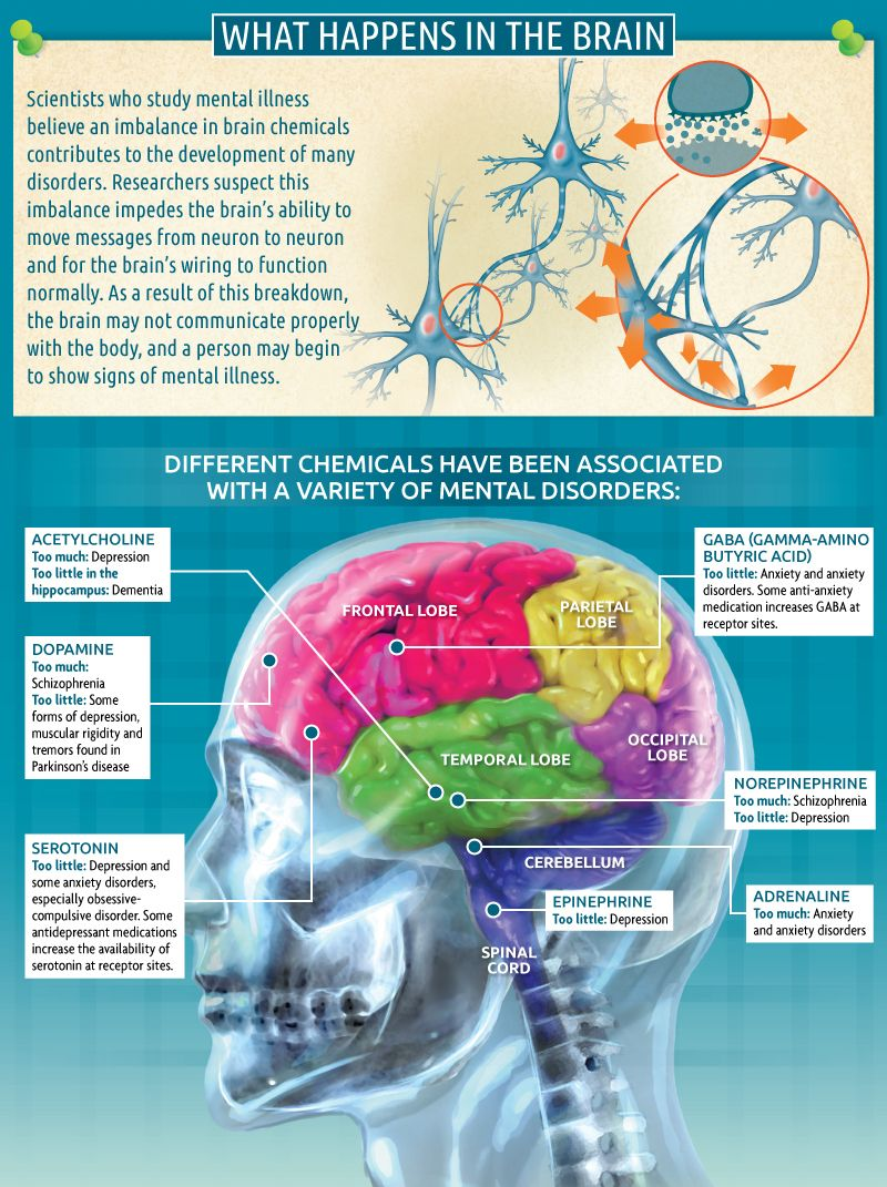 What happens in the Brain?