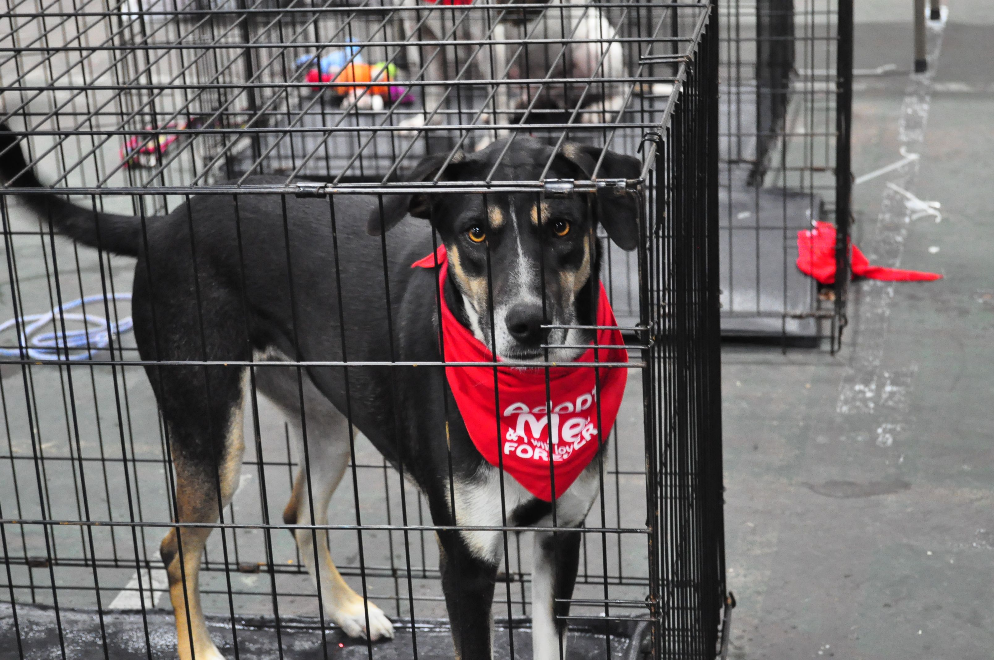 Colorful Adopt Me Bandanas Can Help Draw Attention To Dogs In