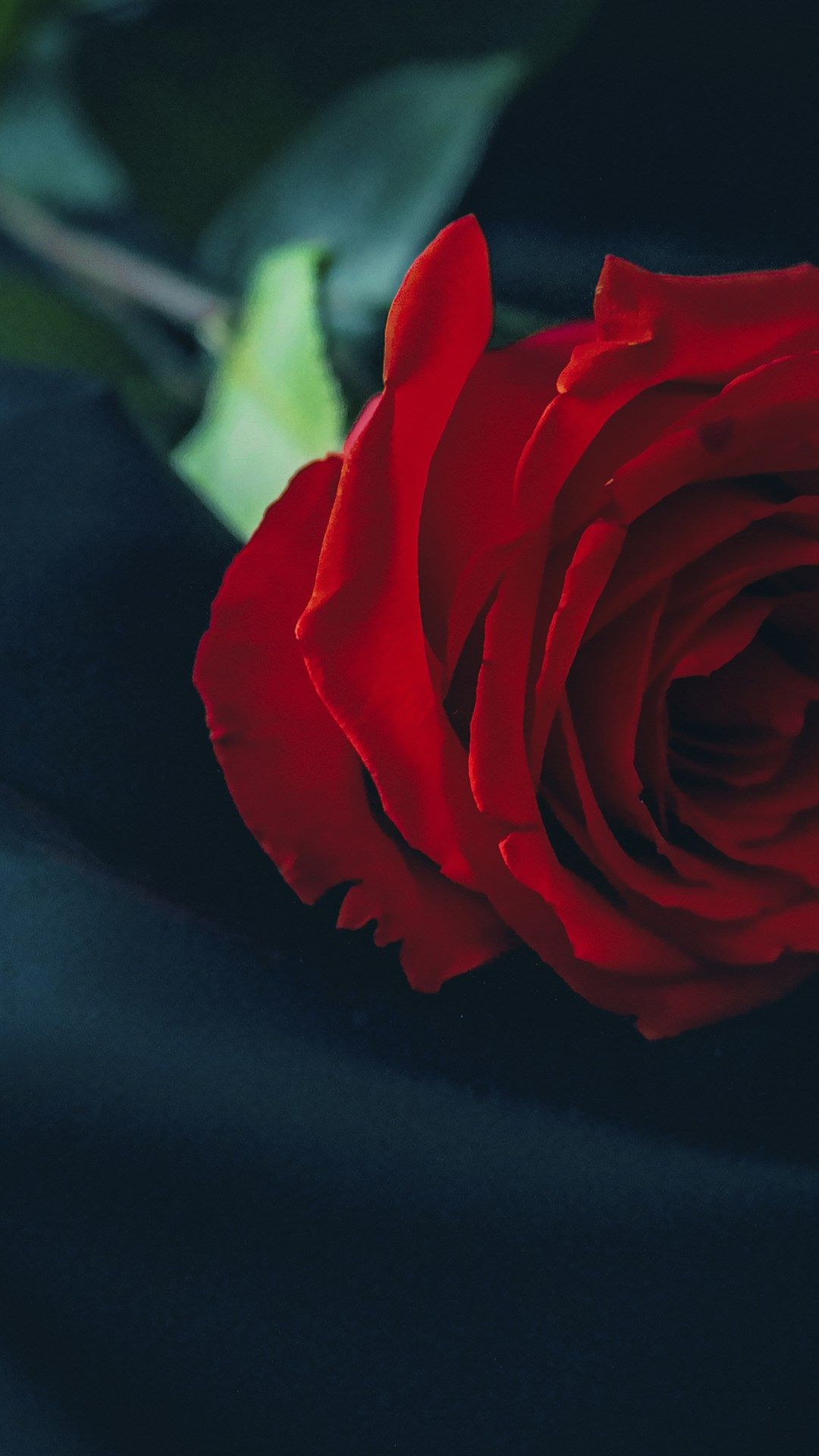Black Silk Red Roses 4k Close Up Red Flowers Bokeh Roses Beautiful Rose Flowers Red Flower Wallpaper Red Roses