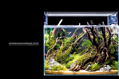 Favourites: Nano Tank By Aqua_color The Amount Of Details That He Fits Into  A Small