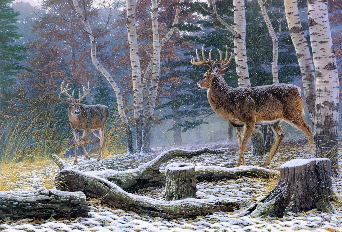 confrontation by al agnew wildlife art pinterest wildlife
