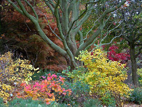 Botanischer Garten Hamburg Im Oktober Botanischer Garten Garten Im Oktober